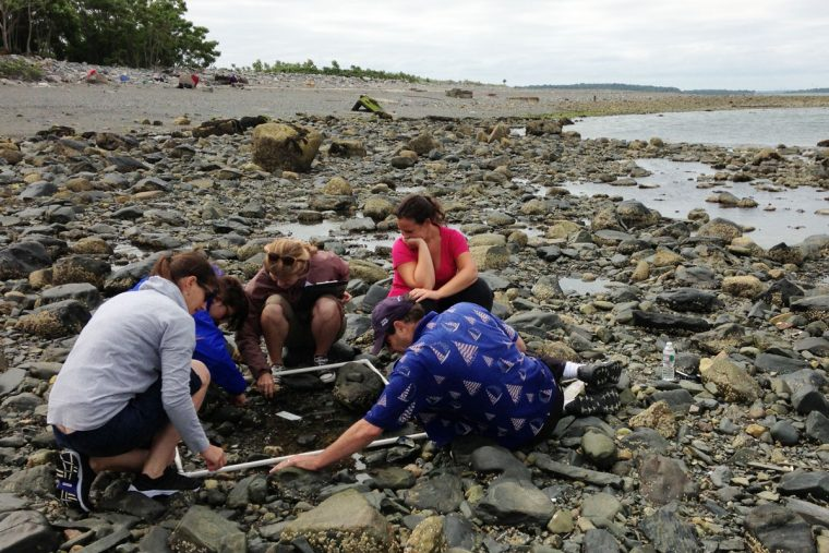 Teachers on rocky beach crouch around transect