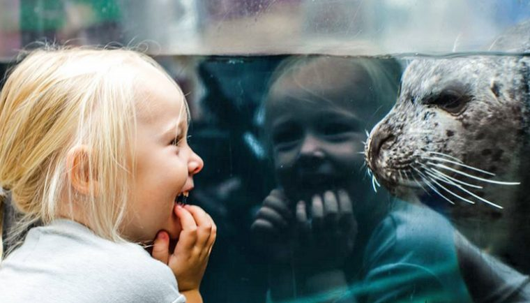 Little girl laughs at the sight of a seal